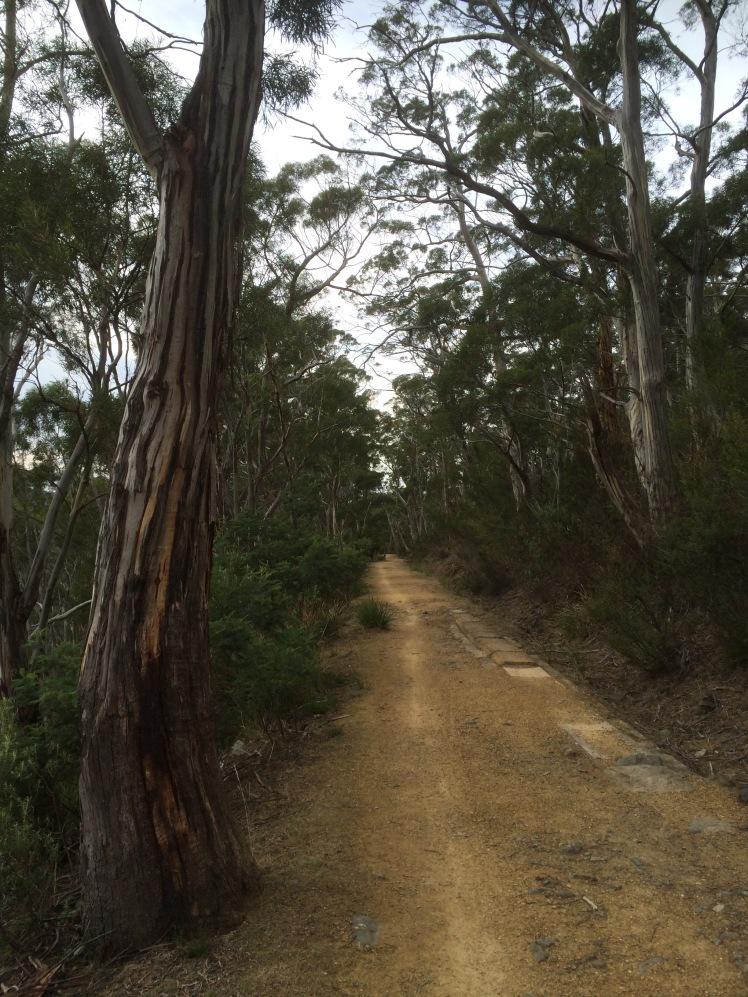 Ridgeway 3