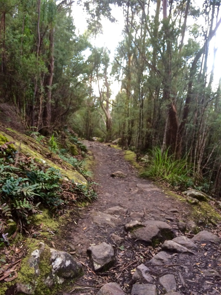 From the Springs to the River: Radfords Track