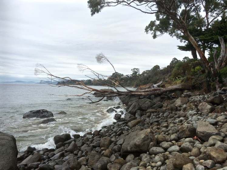 Approaching Grange Beach -eucalypt