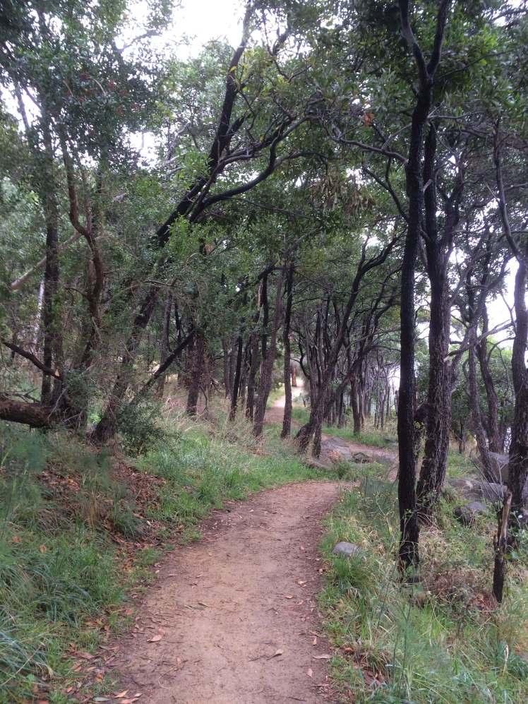Blackwoods on the Taroona foreshore path
