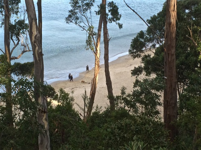 On Tyndall's Beach