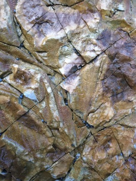 Fossils at Fossil Cove 8