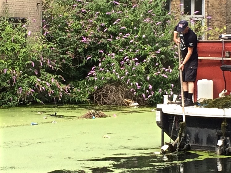 Regent Canal plastic