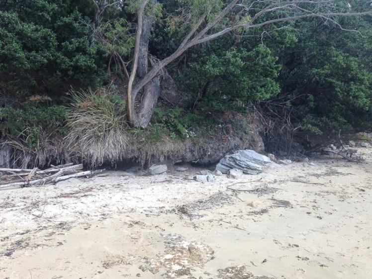 Coningham beach erosion (2017).jpg