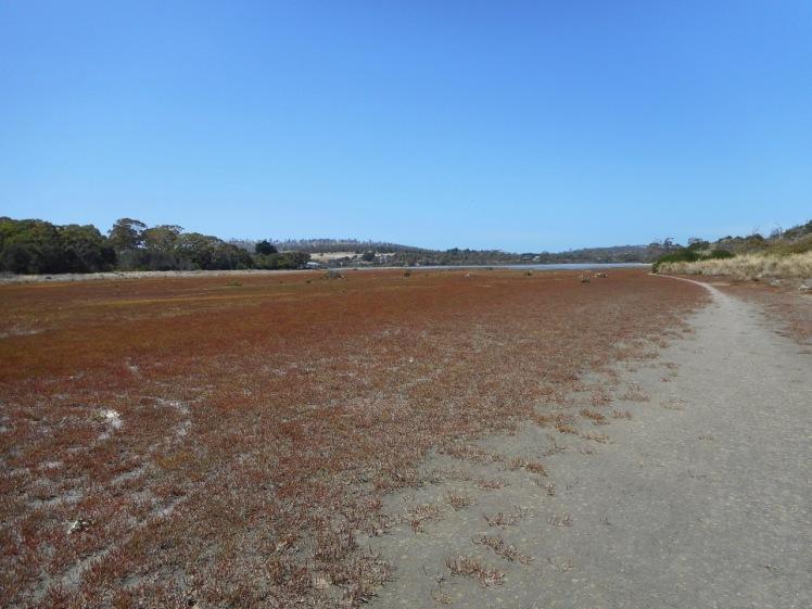 Carlton River (5).jpg