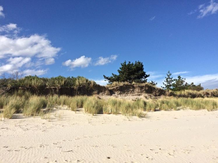 Dune at Primrose Sands.jpg
